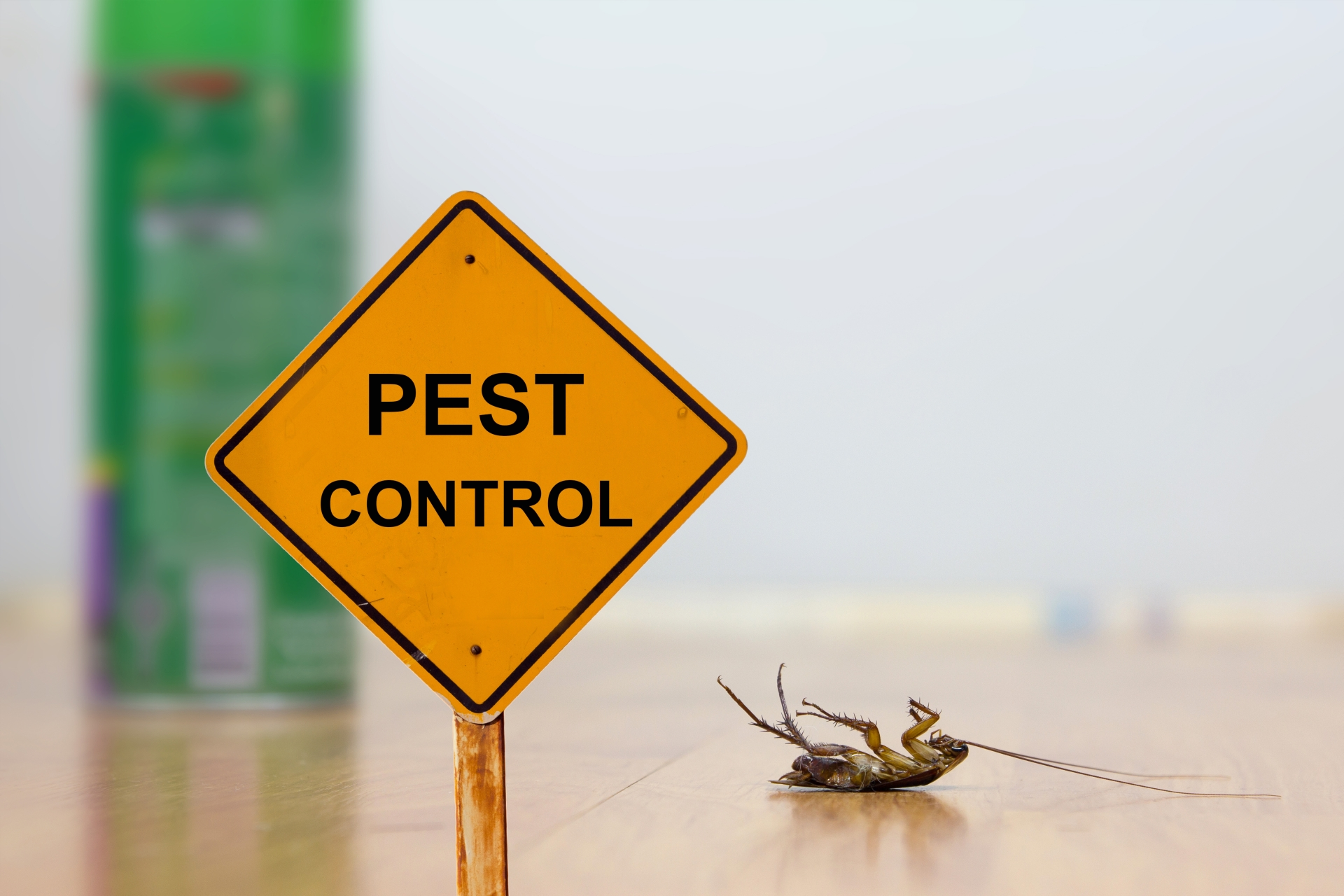 24 Hour Pest Control, Pest Control in Ashford, TW15. Call Now 020 8166 9746
