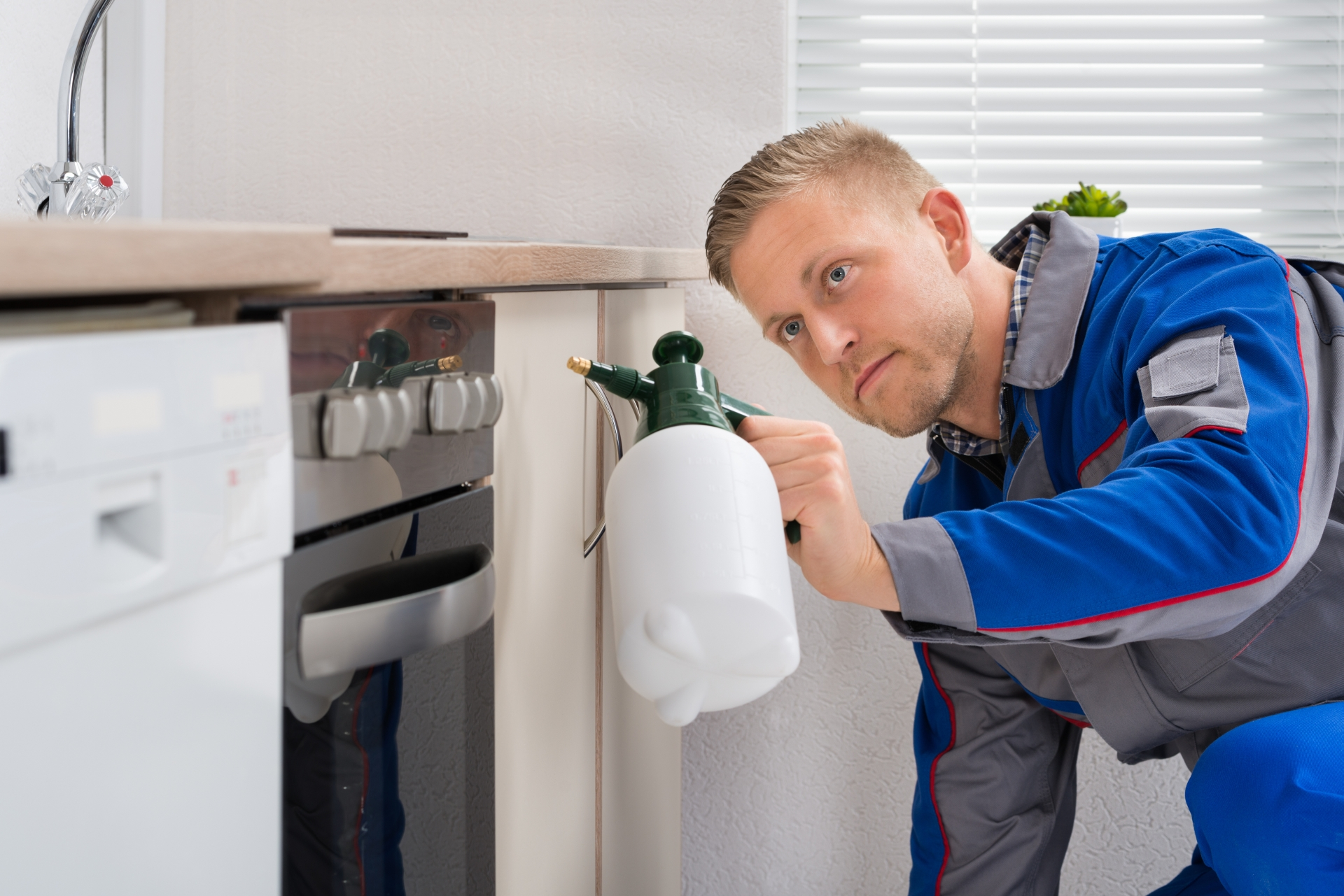 Pest Inspection, Pest Control in Ashford, TW15. Call Now 020 8166 9746